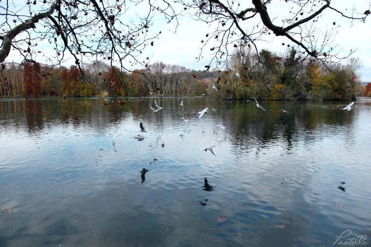 Lac mouettes_12 17 11_1949