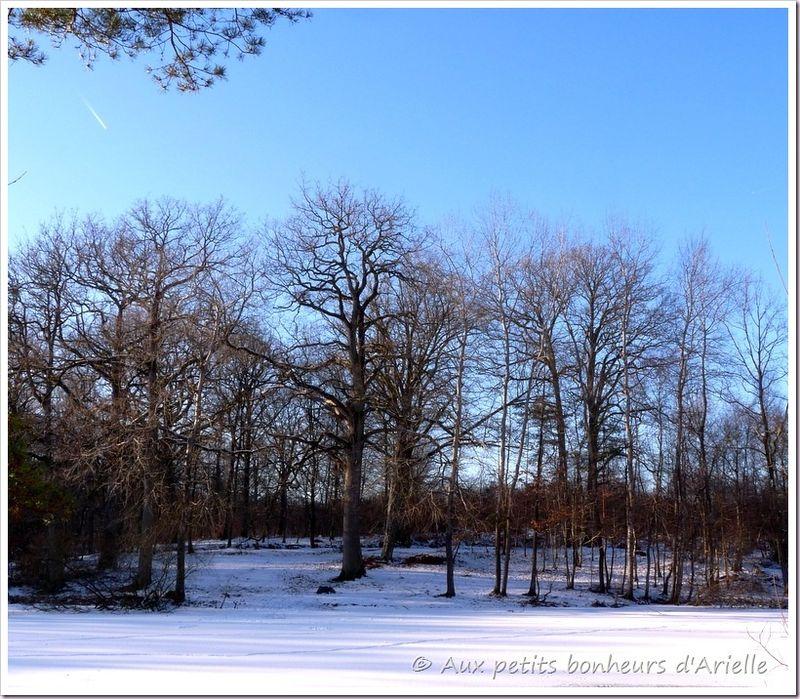 Ma forêt sous la neige (14)