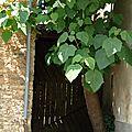 Porte arboricole.