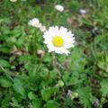 Flower power 13