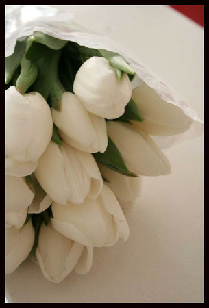tulipes_blanches_1
