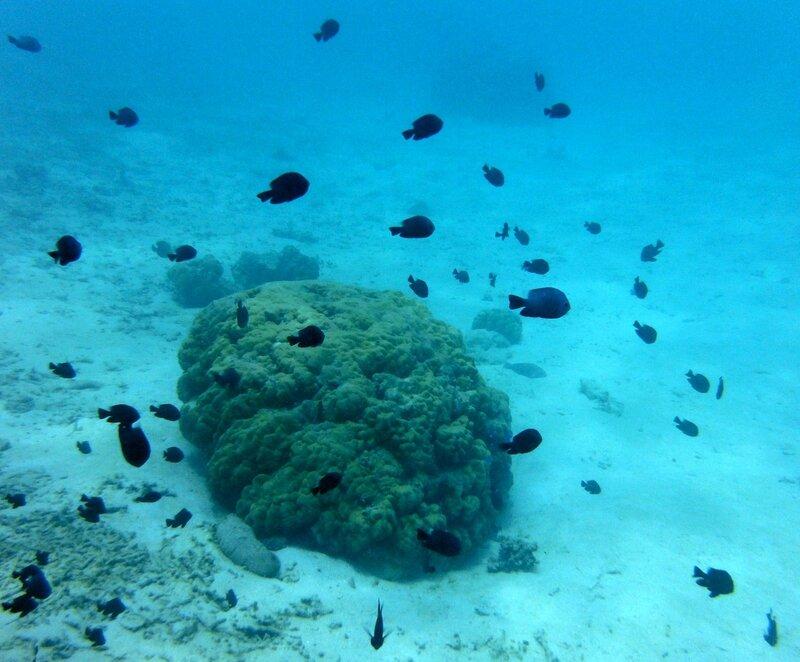 L'aquarium de Rangiroa était plus classe (et moins mort)