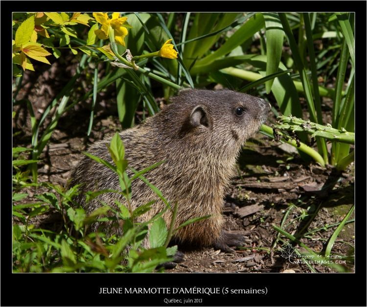 IMG_5935-naturelimages.com