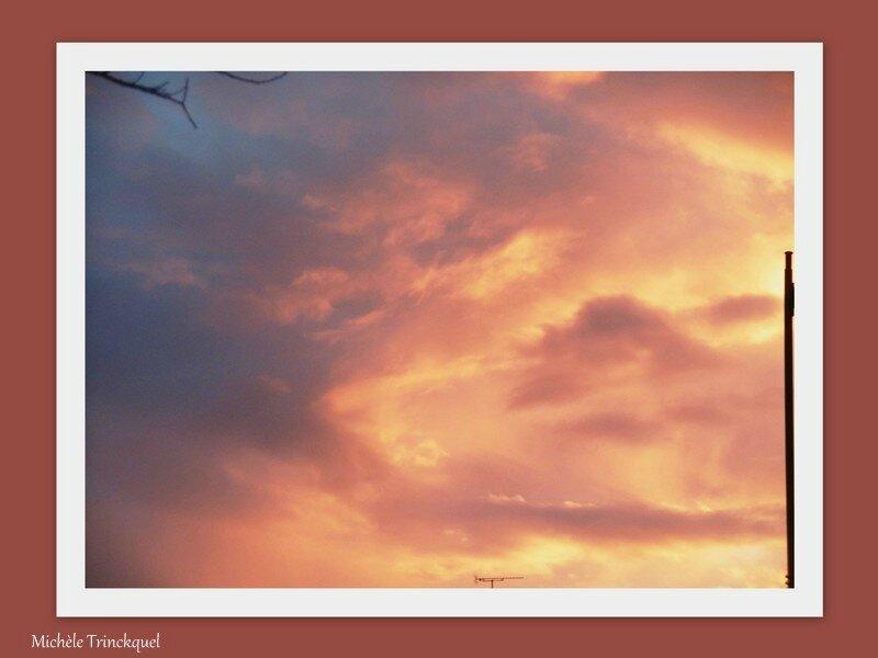 Lever de soleil et Camélias 100118