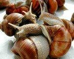 escargot_1_
