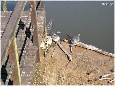 tortues château de la chasse 30 04 2012