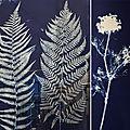 Herbiers et cyanotypes au bon marché