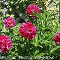 Fleurs de mai au jardin