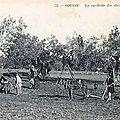 Les cousins - les français à budapest - la france bat le pays de galles - divers - l'huile d'olive tunisienne