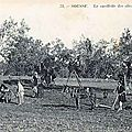 1919-01-03 -Tunisie huile d'olive