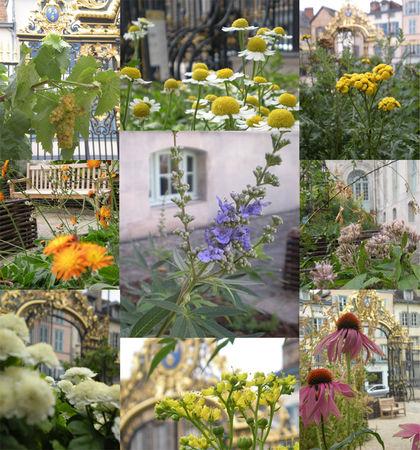 bilan_2009_jardin2