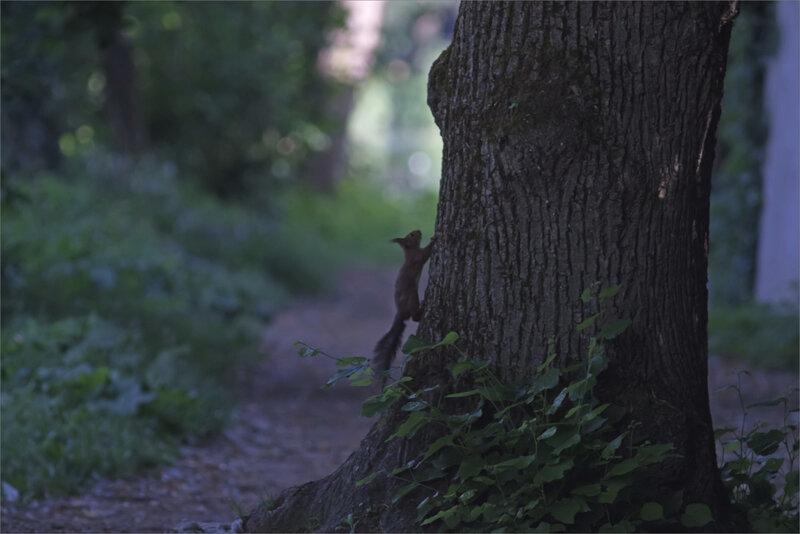 ville arbre écureuil contrej 220519