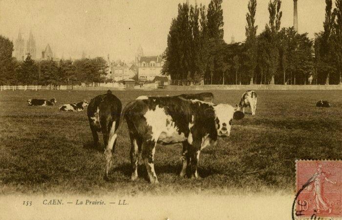 PR1_Vaches-sur-la-prairie-700x450