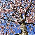 C'est le printemps!!!