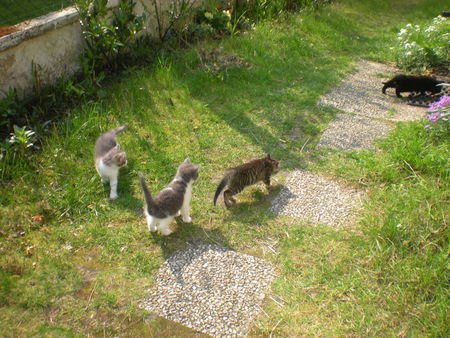 chats_et_nid_018
