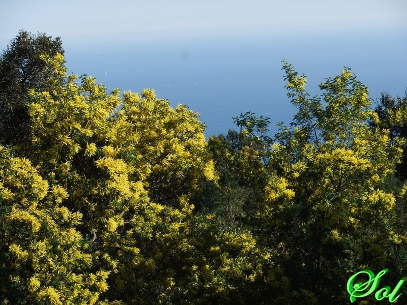 mimosas fevier_09