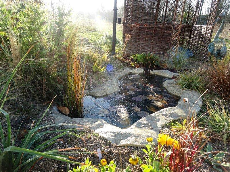 vegetation du bassin de la gloriette