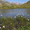 P1000569 Le lac bordé de linaigrettes