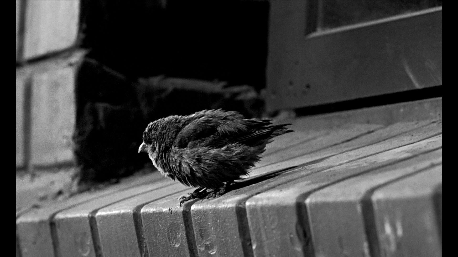 Le Prisonnier Dalcatraz Birdman Of Alcatraz De John