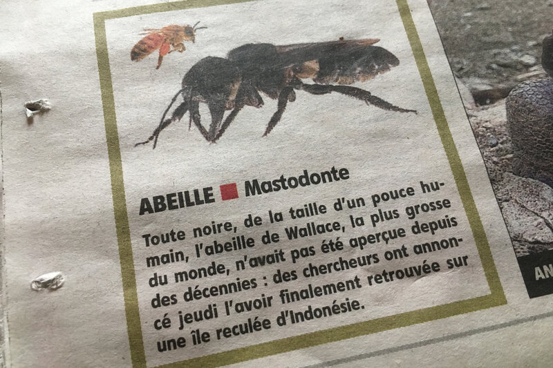Abeille-Wallace