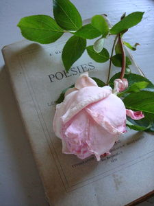 fred_chine_roses02