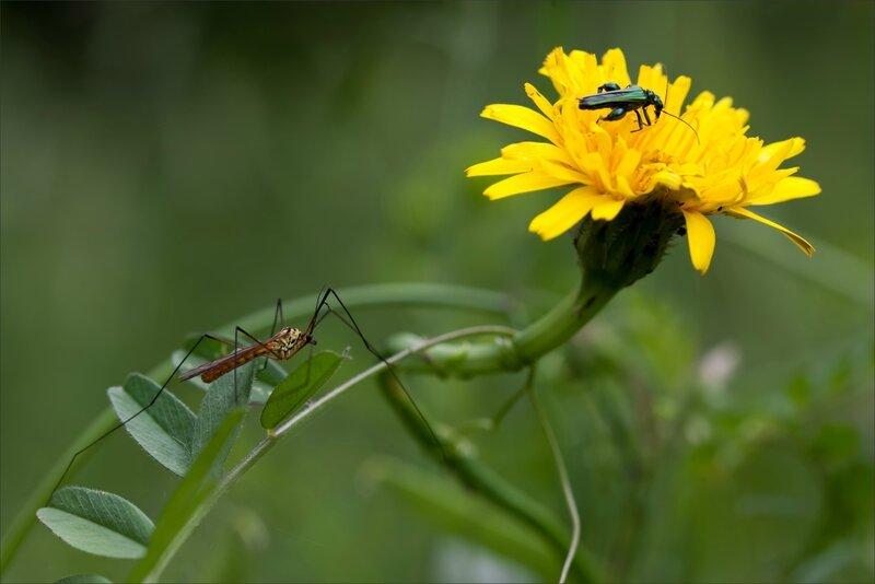 mur insectes fleur 120516