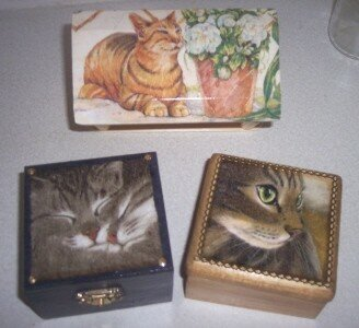 Cats boxes