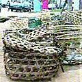 Etat des lieux de la filière avicole au cameroun/ les statistiques de l'ipavic