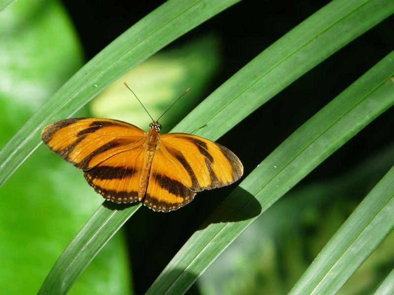 Butterfly_052408_50