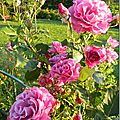 Windows-Live-Writer/Jardin_10232/DSCN0787_thumb