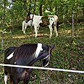 Les cavaliers et leur monture ...