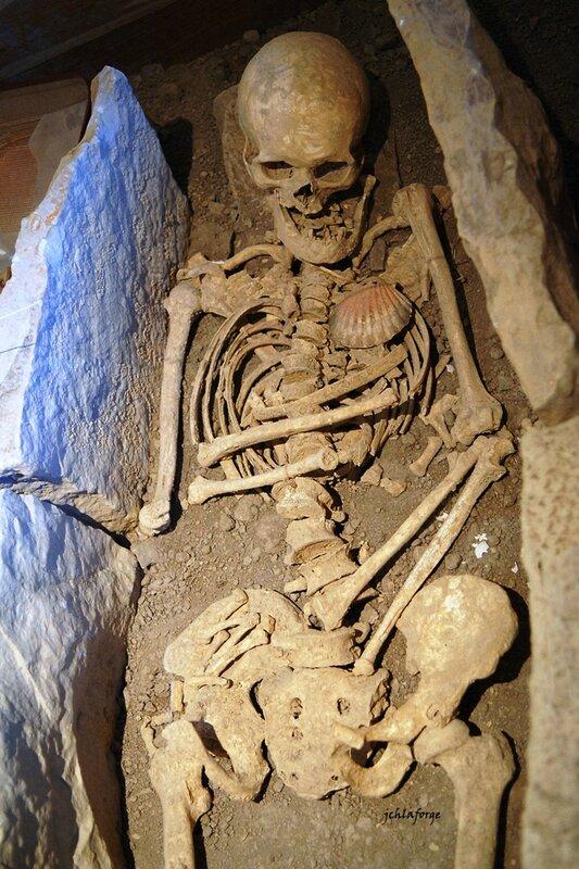 Squelette Tusson