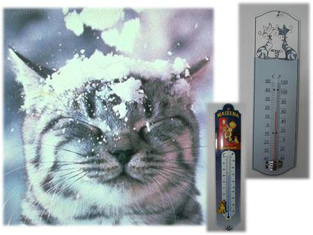 COLLEC CATS (43)