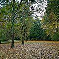 Challenge d'automne bois de guilhou