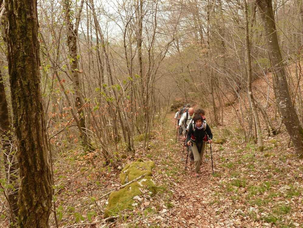 Montée tranquille dans la forêt