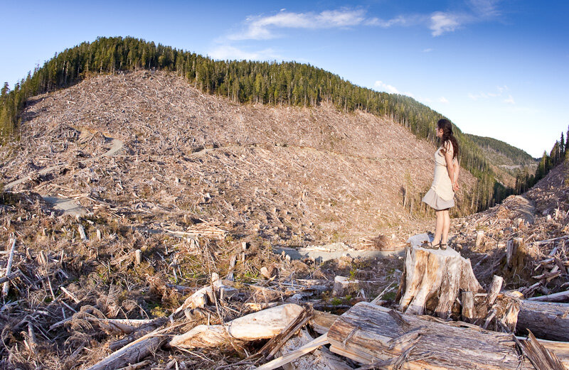 Bugaboo_Hollow_Clearcut-5