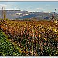 Le bas-bugey: la vigne