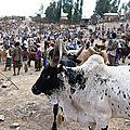 Marche aux bestiaux