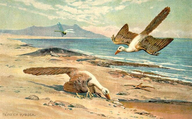 Archeopteryx_color