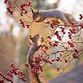 écureuil automne