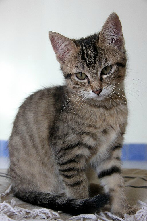 3-Happy cat_4209