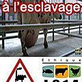 Manifestation à abbeville: dites non a l'esclavage animal!