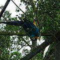 27 avril 2013 Zoo de Cayenne (20)