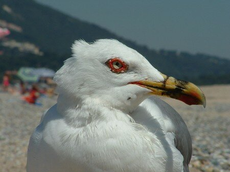 MOUETTE_UNE_PATTE_G_P__R_solution_de_l__cran_