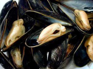 normal_moules