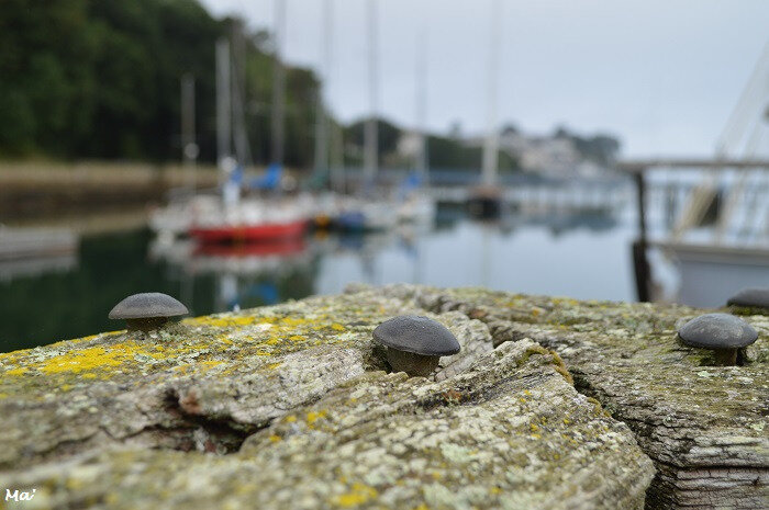 180814_douarnenez_port_musee_2