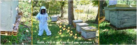 Blog apiculture division d'une ruche abeilles (3)
