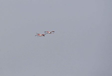 IMG_7233l_g_re