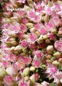 couleurs fleurs du jardin