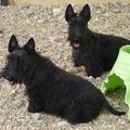 Shadow & Sidonie, filles d'Aglaé & Willy